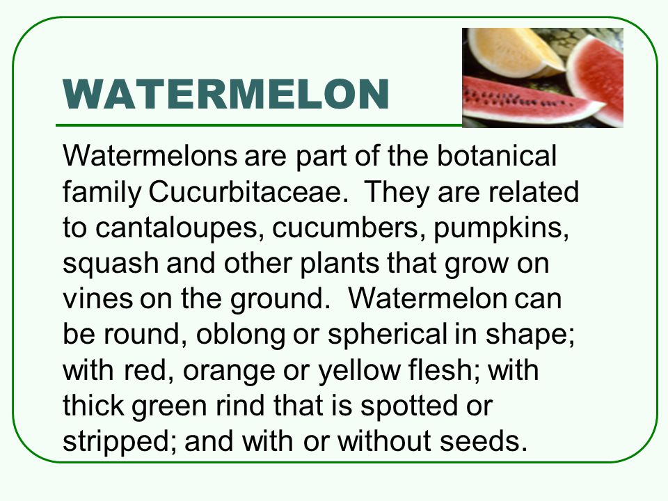 WATERMELON Watermelons are part of the botanical family Cucurbitaceae.