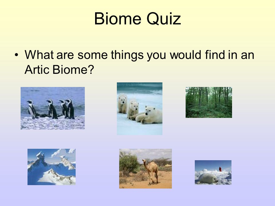 Biome Quiz What are some of the animals you can find in a fresh water Biome?
