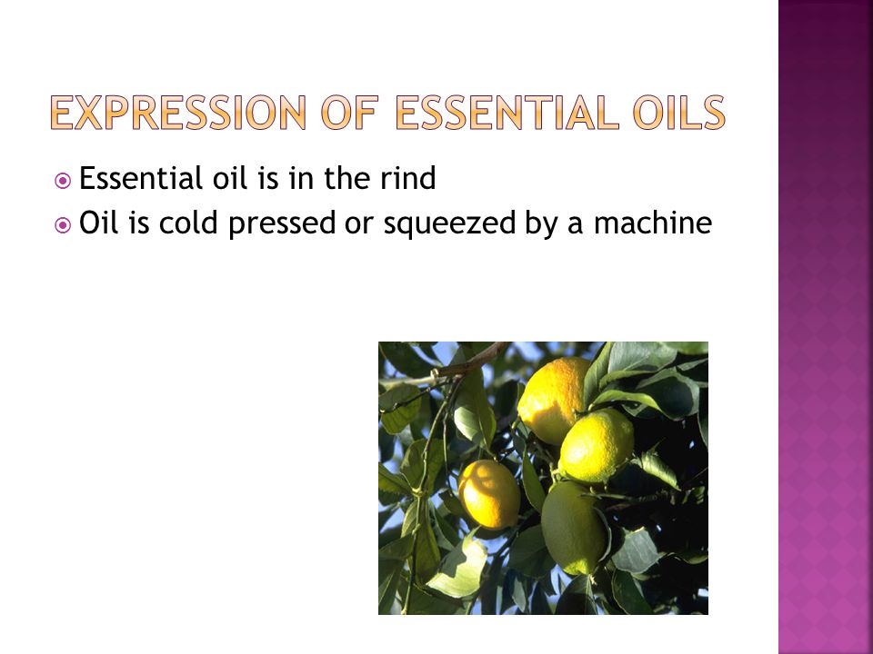  Essential oil is in the rind  Oil is cold pressed or squeezed by a machine