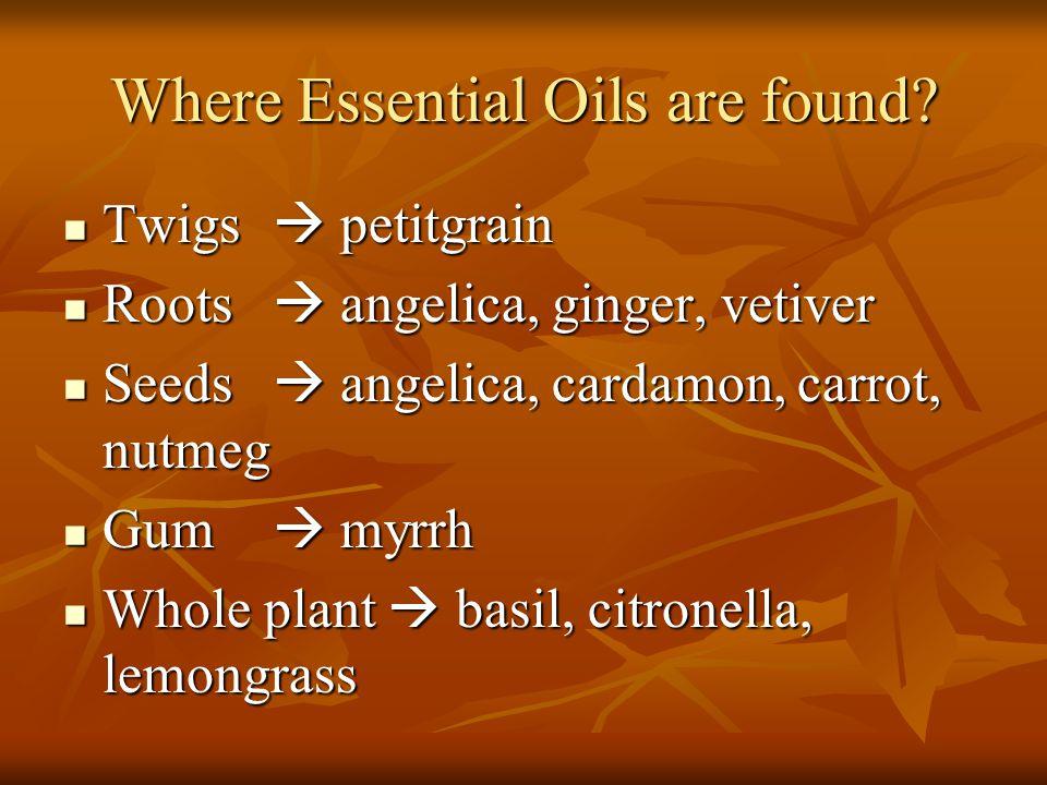 Where Essential Oils are found? Twigs  petitgrain Twigs  petitgrain Roots  angelica, ginger, vetiver Roots  angelica, ginger, vetiver Seeds  ange