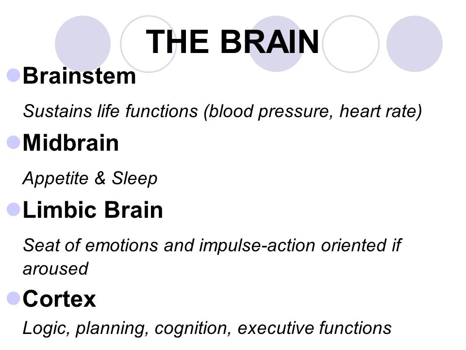 Brainstem Sustains life functions (blood pressure, heart rate) Midbrain Appetite & Sleep Limbic Brain Seat of emotions and impulse-action oriented if aroused Cortex Logic, planning, cognition, executive functions THE BRAIN