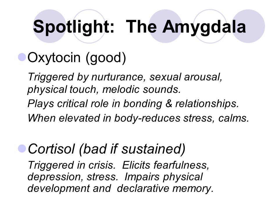 Spotlight: The Amygdala Oxytocin (good) Triggered by nurturance, sexual arousal, physical touch, melodic sounds.