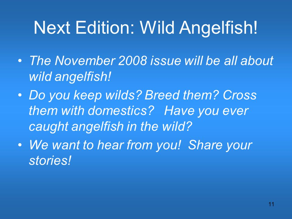 11 Next Edition: Wild Angelfish! The November 2008 issue will be all about wild angelfish! Do you keep wilds? Breed them? Cross them with domestics? H