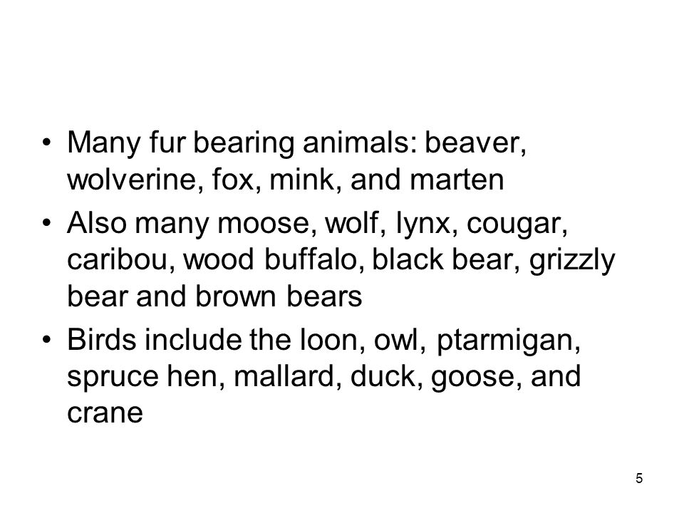 5 Many fur bearing animals: beaver, wolverine, fox, mink, and marten Also many moose, wolf, lynx, cougar, caribou, wood buffalo, black bear, grizzly bear and brown bears Birds include the loon, owl, ptarmigan, spruce hen, mallard, duck, goose, and crane