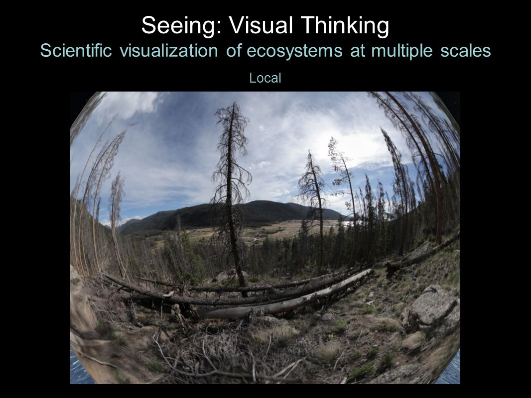 Seeing: Visual Thinking Scientific visualization of ecosystems at multiple scales Local