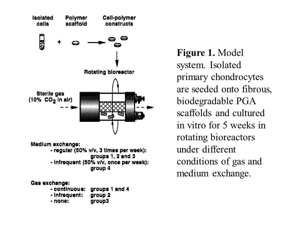 Figure 1. Model system.