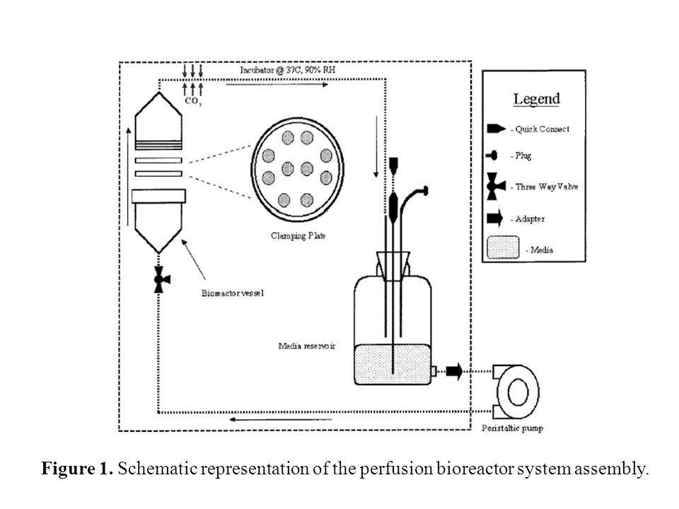 Figure 1. Schematic representation of the perfusion bioreactor system assembly.