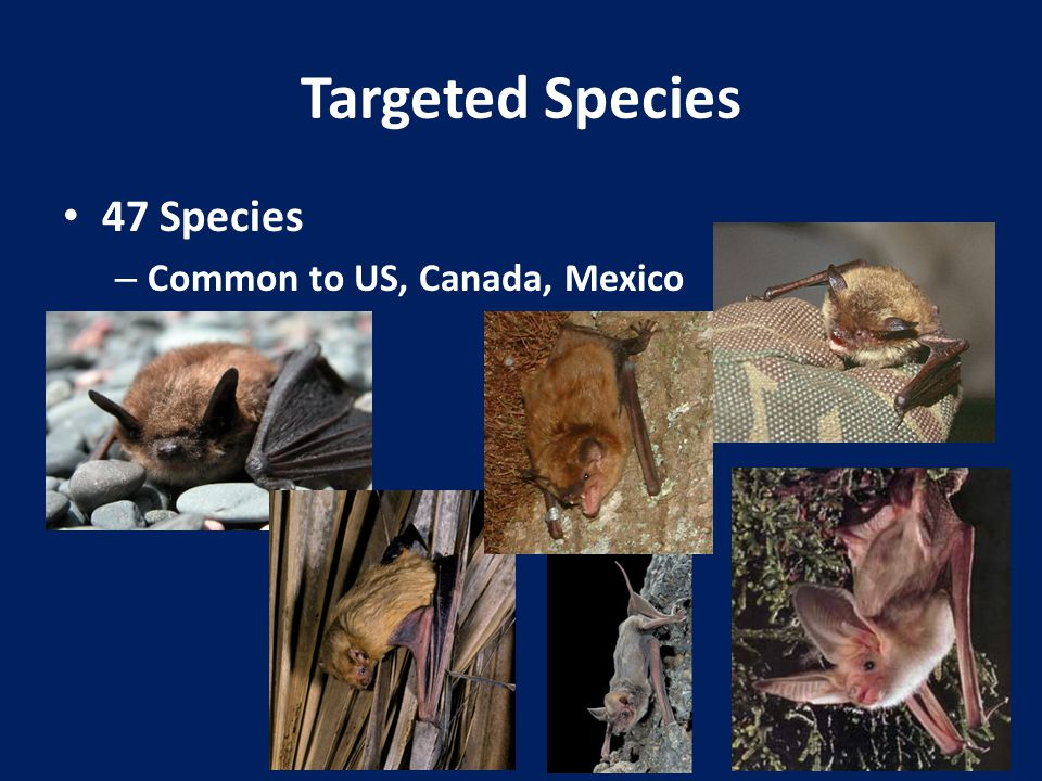 Targeted Species 47 Species – Common to US, Canada, Mexico