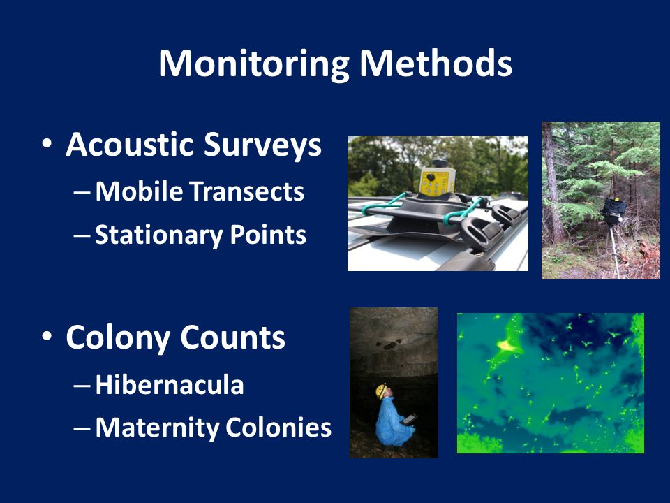 Monitoring Methods Acoustic Surveys – Mobile Transects – Stationary Points Colony Counts – Hibernacula – Maternity Colonies