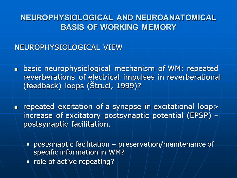 NEUROPHYSIOLOGICAL AND NEUROANATOMICAL BASIS OF WORKING MEMORY NEUROPHYSIOLOGICAL VIEW basic neurophysiological mechanism of WM: repeated reverberations of electrical impulses in reverberational (feedback) loops (Štrucl, 1999).