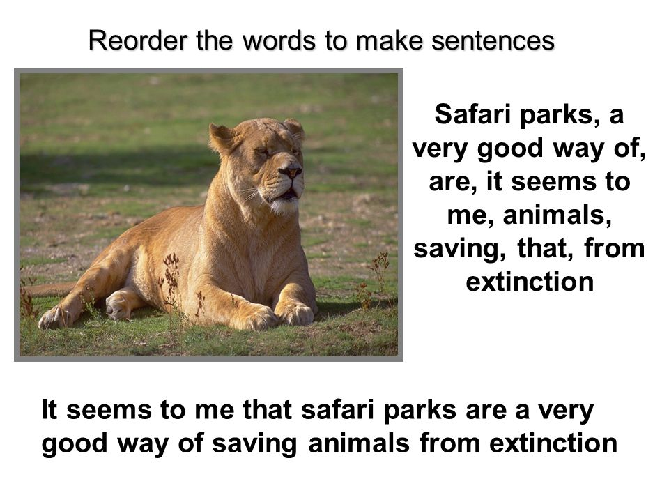 Safari parks, a very good way of, are, it seems to me, animals, saving, that, from extinction It seems to me that safari parks are a very good way of saving animals from extinction Reorder the words to make sentences