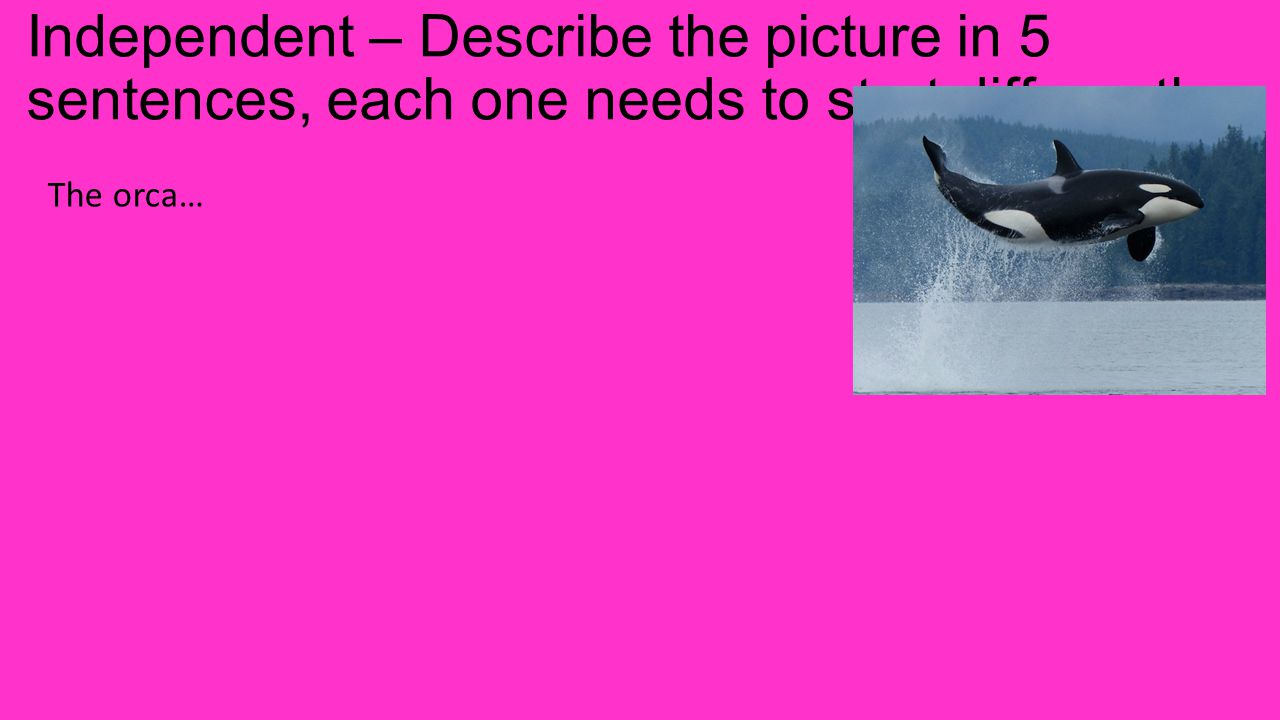 Independent – Describe the picture in 5 sentences, each one needs to start differently. The orca…