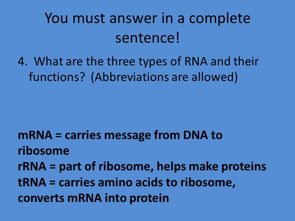 You must answer in a complete sentence! 4. What are the three types of RNA and their functions? (Abbreviations are allowed) mRNA = carries message fro