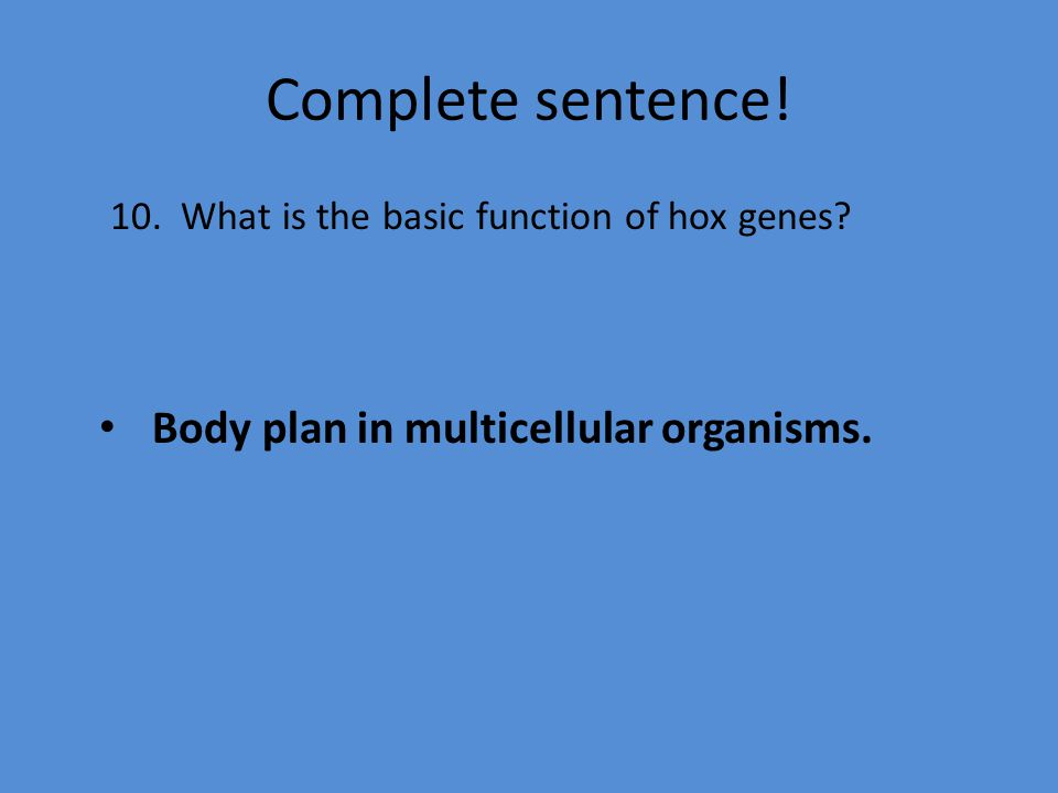Complete sentence. 10. What is the basic function of hox genes.