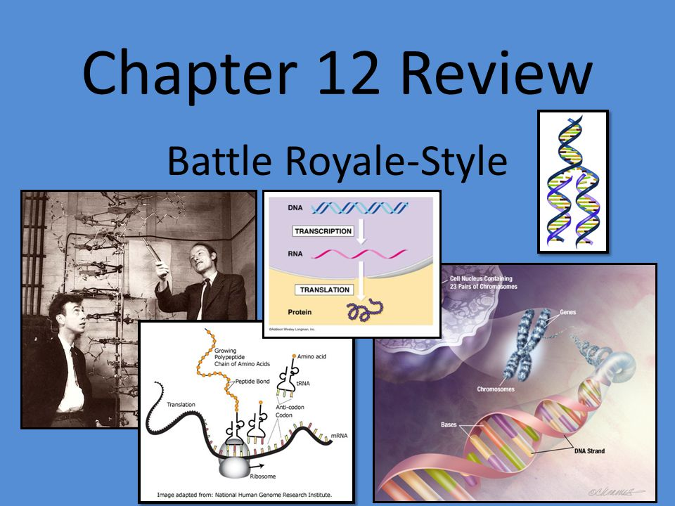 Chapter 12 Review Battle Royale-Style