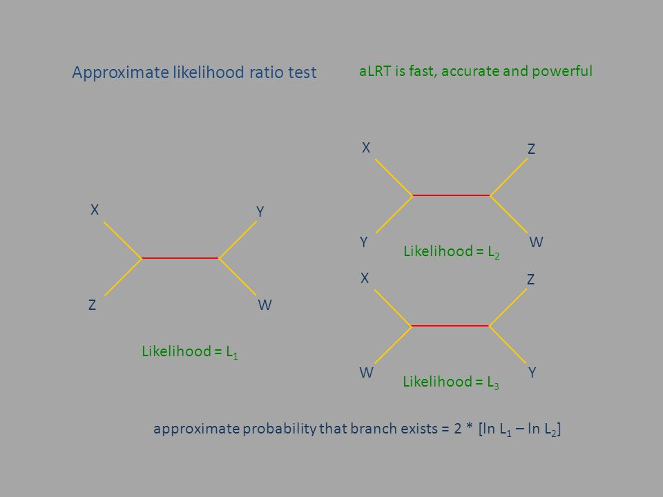 Approximate likelihood ratio test aLRT is fast, accurate and powerful X Y W Z Likelihood = L 1 Likelihood = L 2 approximate probability that branch exists = 2 * [ln L 1 – ln L 2 ] X Z W Y Likelihood = L 3 X Z Y W