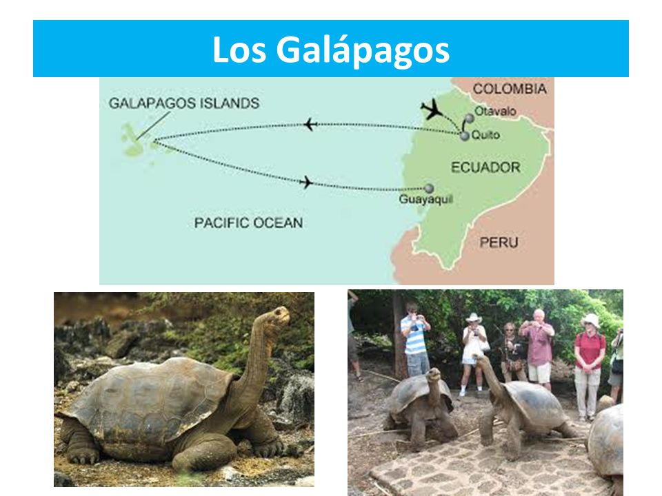 Galapagos: Jeff Corwin Experience  Jeff follows the evolutionary footsteps of Charles Darwin in the archipelago known as Galapagos, where he encounters marine and land iguanas, giant tortoise, as well as a whole new species that has evolved since Darwin s time.
