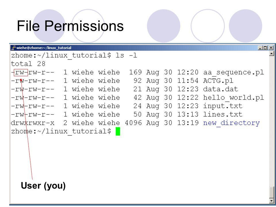 File Permissions User (you)