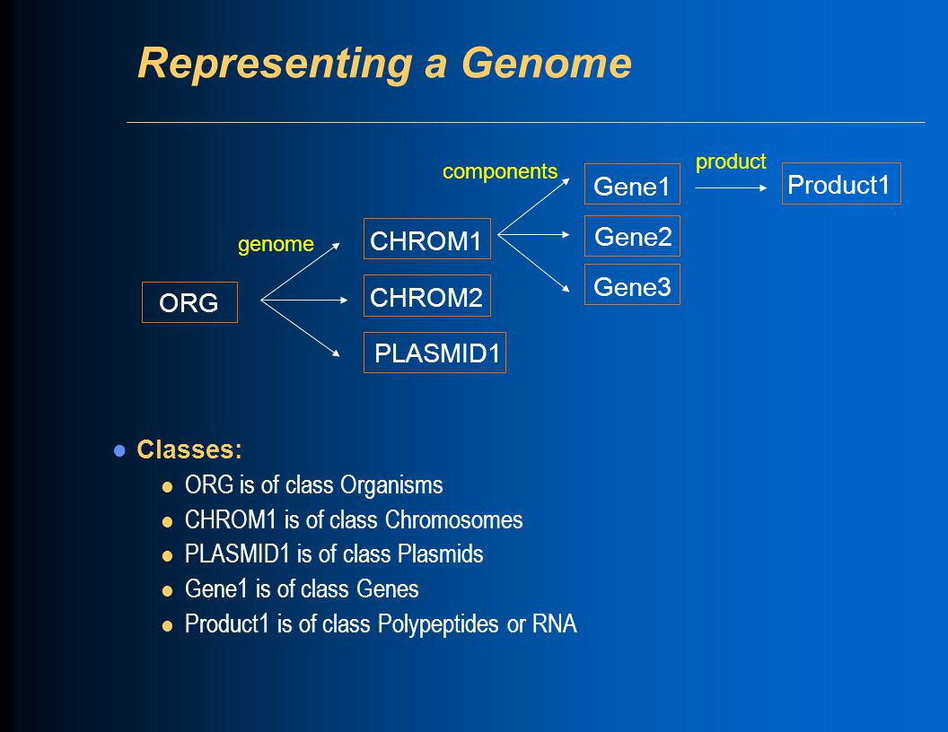 Representing a Genome Classes: l ORG is of class Organisms l CHROM1 is of class Chromosomes l PLASMID1 is of class Plasmids l Gene1 is of class Genes l Product1 is of class Polypeptides or RNA ORG CHROM1 CHROM2 PLASMID1 Gene1 Gene2 Gene3 genome components Product1 product