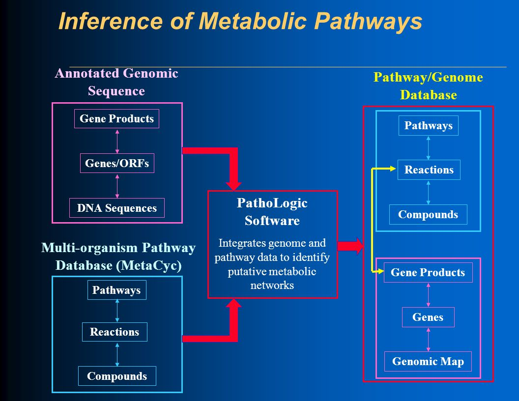 Inference of Metabolic Pathways Pathway/Genome Database Annotated Genomic Sequence Genes/ORFs Gene Products DNA Sequences Reactions Pathways Compounds Multi-organism Pathway Database (MetaCyc) PathoLogic Software Integrates genome and pathway data to identify putative metabolic networks Genomic Map Genes Gene Products Reactions Pathways Compounds
