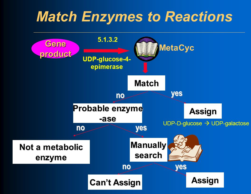 Match Enzymes to ReactionsMatch Gene product 5.1.3.2 UDP-glucose-4- epimerase yes Assign no Probable enzyme -ase noyes Not a metabolic enzyme Manually