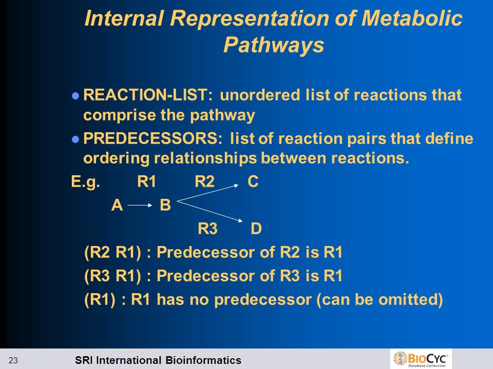 SRI International Bioinformatics 23 Internal Representation of Metabolic Pathways REACTION-LIST: unordered list of reactions that comprise the pathway PREDECESSORS: list of reaction pairs that define ordering relationships between reactions.