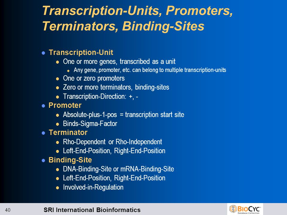 SRI International Bioinformatics 40 Transcription-Units, Promoters, Terminators, Binding-Sites Transcription-Unit l One or more genes, transcribed as a unit u Any gene, promoter, etc.