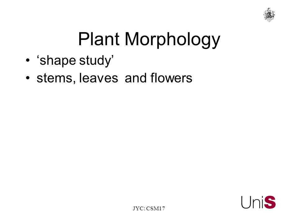 JYC: CSM17 Plant Morphology 'shape study' stems, leaves and flowers