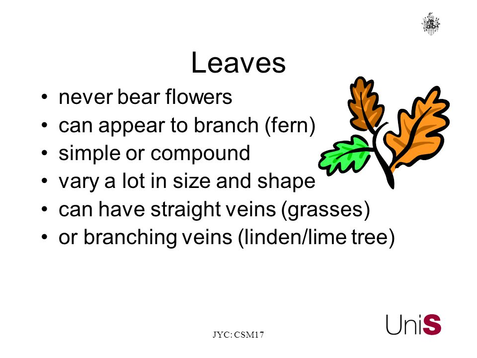JYC: CSM17 Leaves never bear flowers can appear to branch (fern) simple or compound vary a lot in size and shape can have straight veins (grasses) or