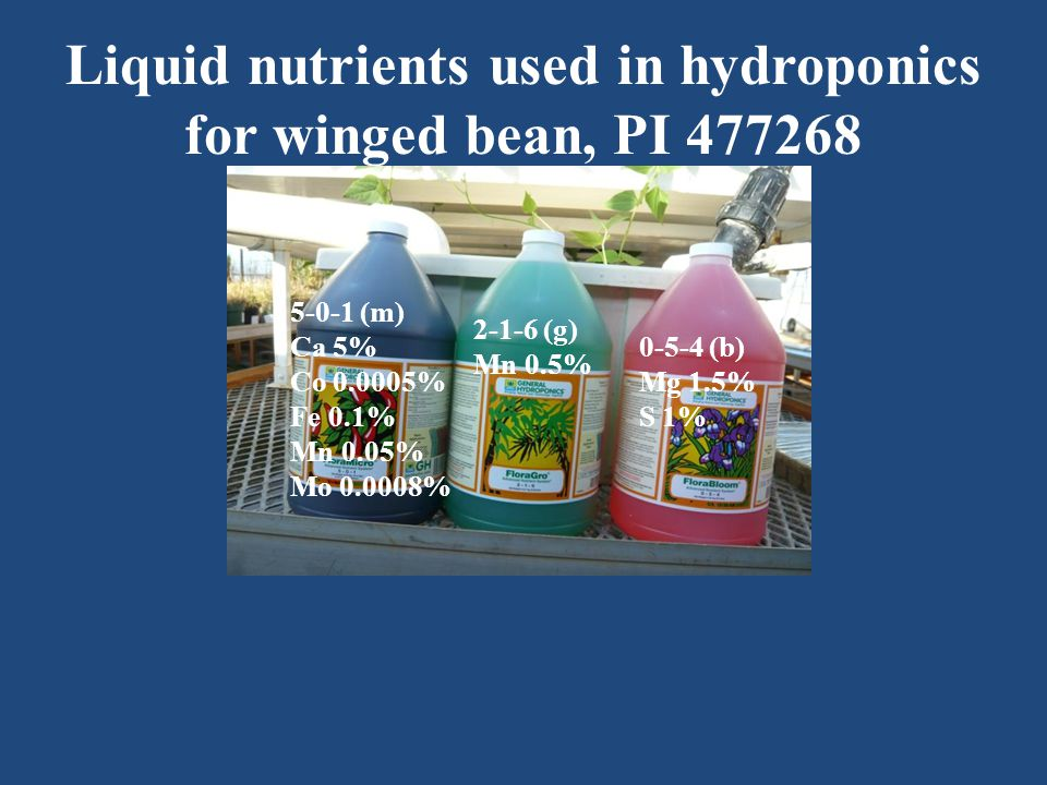 Liquid nutrients used in hydroponics for winged bean, PI 477268 5-0-1 (m) Ca 5% Co 0.0005% Fe 0.1% Mn 0.05% Mo 0.0008% 2-1-6 (g) Mn 0.5% 0-5-4 (b) Mg 1.5% S 1%