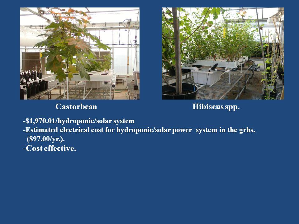 CastorbeanHibiscus spp.