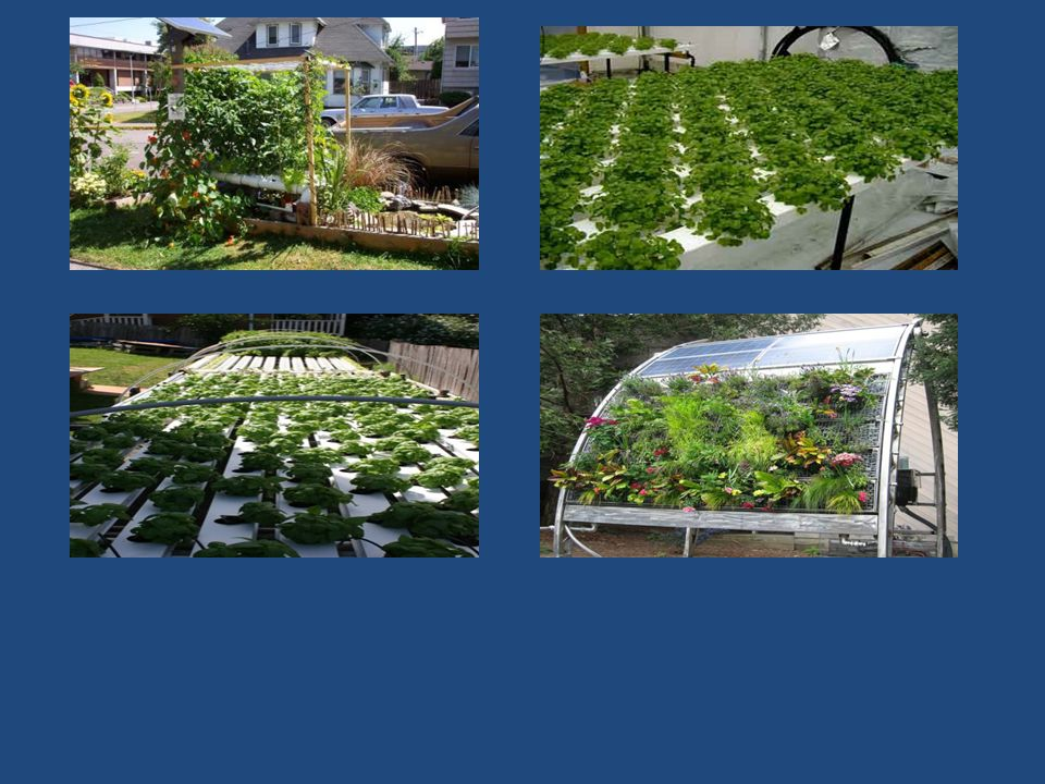 Objectives Hydroponics – Can it be a useful tool to regenerate difficult accessions.