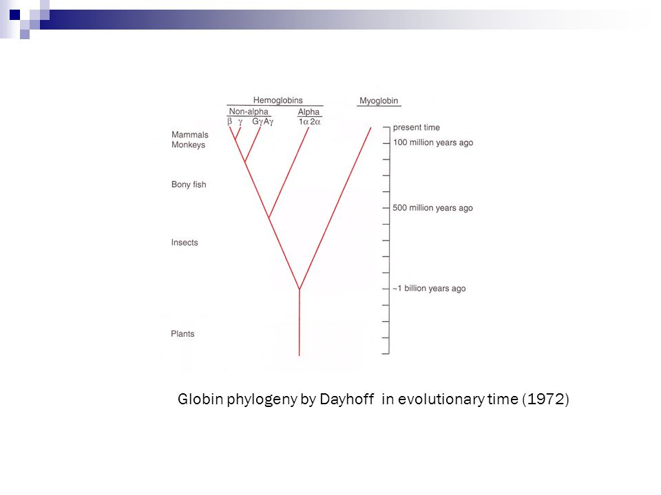 Globin phylogeny by Dayhoff in evolutionary time (1972)