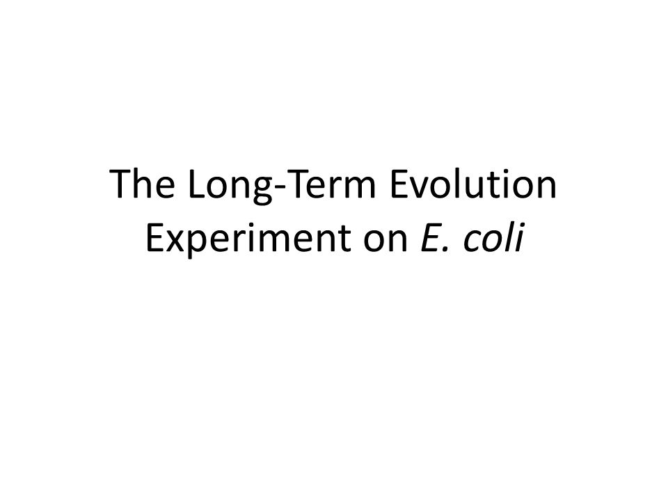 The Long-Term Evolution Experiment on E. coli