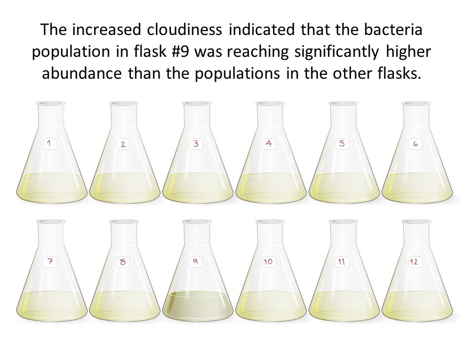 The increased cloudiness indicated that the bacteria population in flask #9 was reaching significantly higher abundance than the populations in the ot