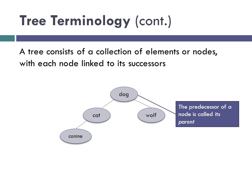 Tree Terminology (cont.) dog cat wolf canine A tree consists of a collection of elements or nodes, with each node linked to its successors The predecessor of a node is called its parent
