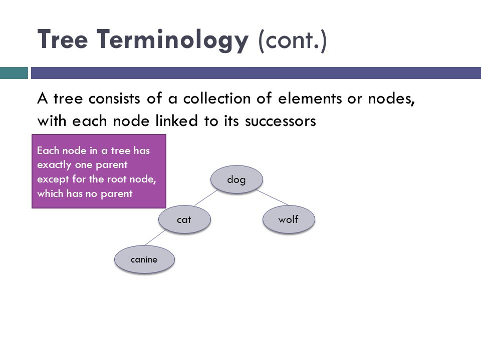 Tree Terminology (cont.) dog cat wolf canine A tree consists of a collection of elements or nodes, with each node linked to its successors Each node in a tree has exactly one parent except for the root node, which has no parent