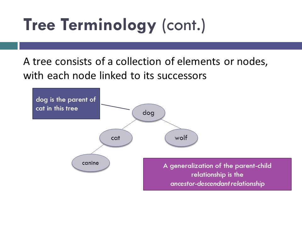 Tree Terminology (cont.) dog cat wolf canine A tree consists of a collection of elements or nodes, with each node linked to its successors dog is the