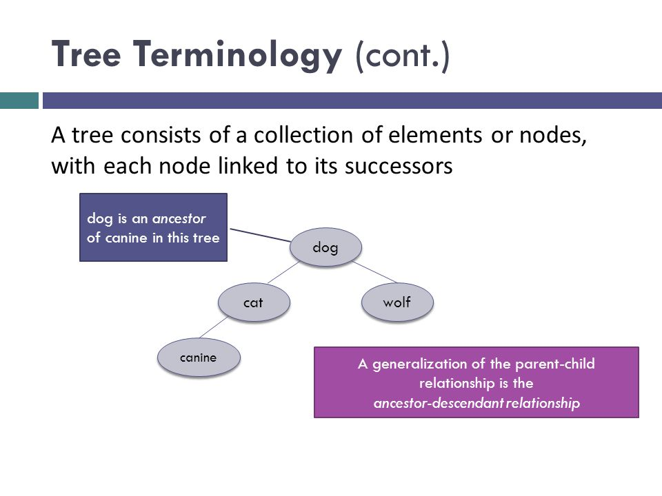 Tree Terminology (cont.) dog cat wolf canine A tree consists of a collection of elements or nodes, with each node linked to its successors dog is an ancestor of canine in this tree A generalization of the parent-child relationship is the ancestor-descendant relationship
