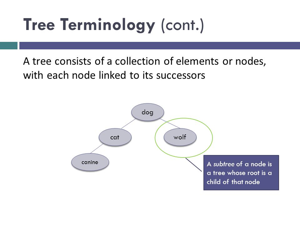 Tree Terminology (cont.) dog cat wolf canine A tree consists of a collection of elements or nodes, with each node linked to its successors A subtree of a node is a tree whose root is a child of that node