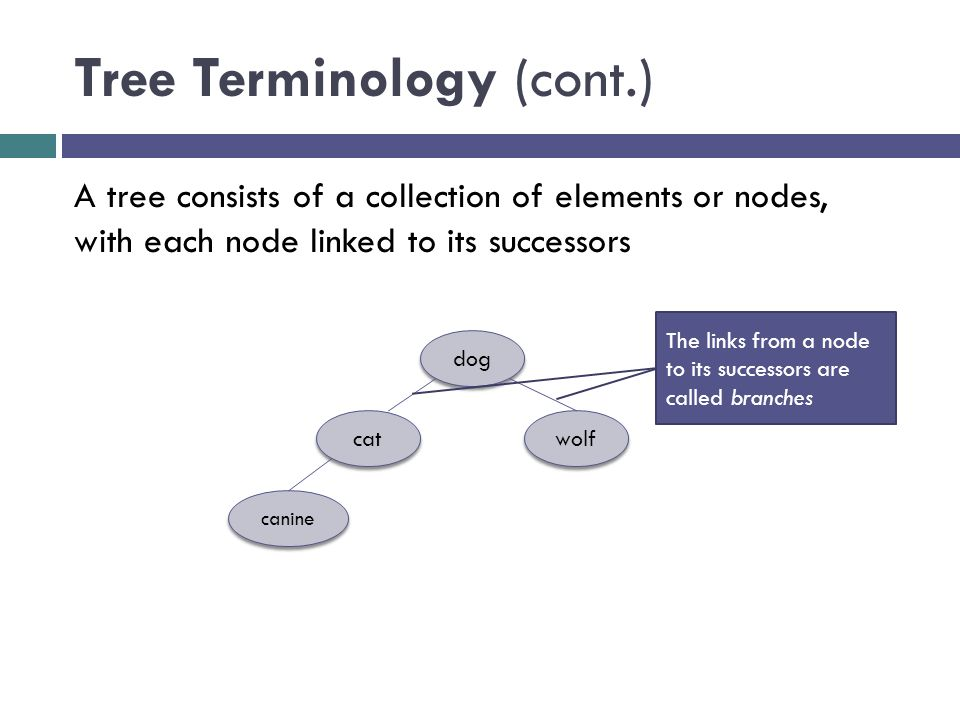 Tree Terminology (cont.) dog cat wolf canine A tree consists of a collection of elements or nodes, with each node linked to its successors The links from a node to its successors are called branches