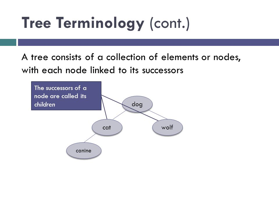Tree Terminology (cont.) dog cat wolf canine A tree consists of a collection of elements or nodes, with each node linked to its successors The success