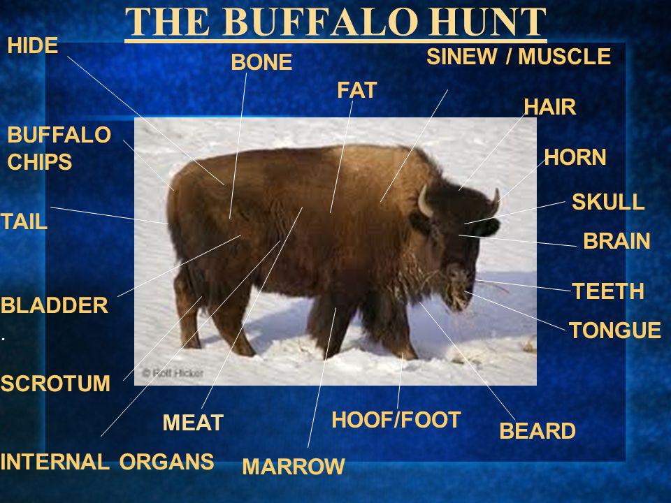 THE BUFFALO HUNT HIDE BUFFALO CHIPS TAIL BLADDER. SCROTUM INTERNAL ORGANS MARROW HOOF/FOOT BONE SINEW / MUSCLE HAIR HORN SKULL BRAIN FAT TEETH TONGUE
