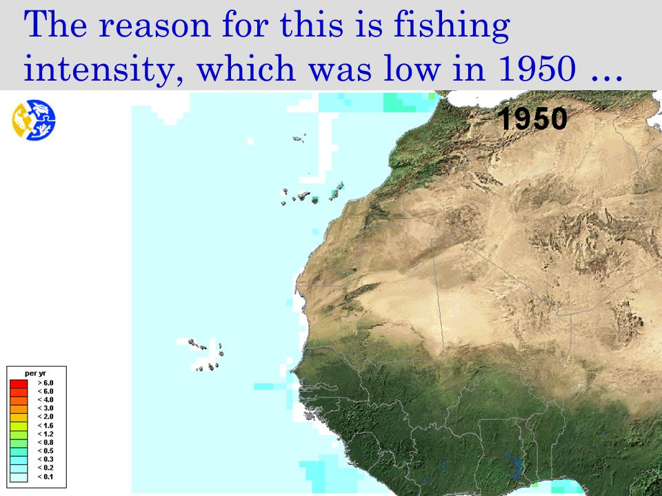 The reason for this is fishing intensity, which was low in 1950 …