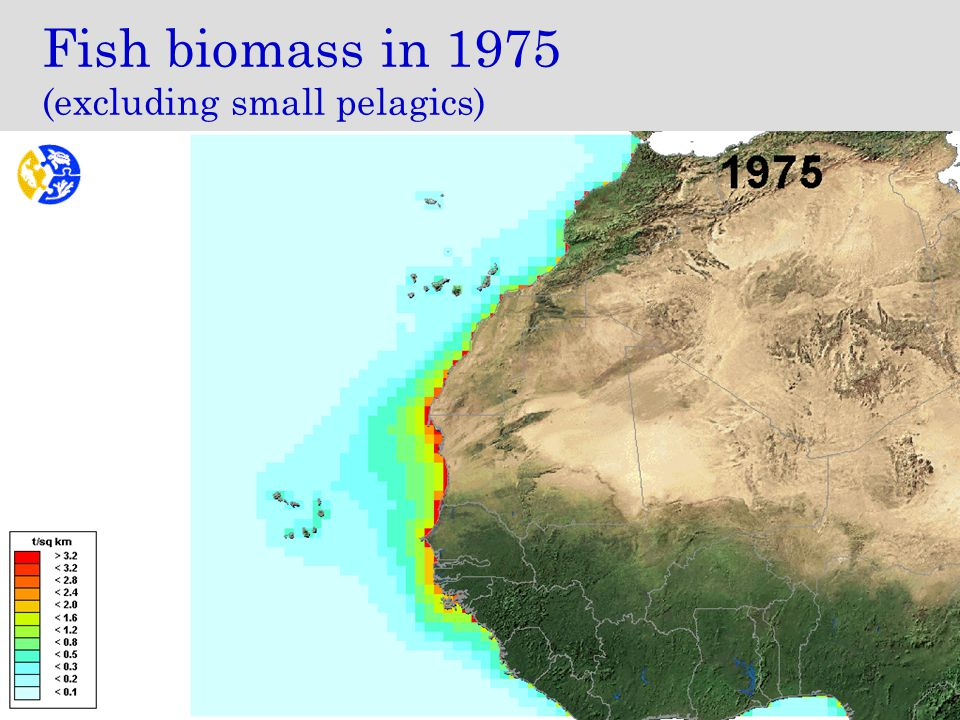 Fish biomass in 1975 (excluding small pelagics)