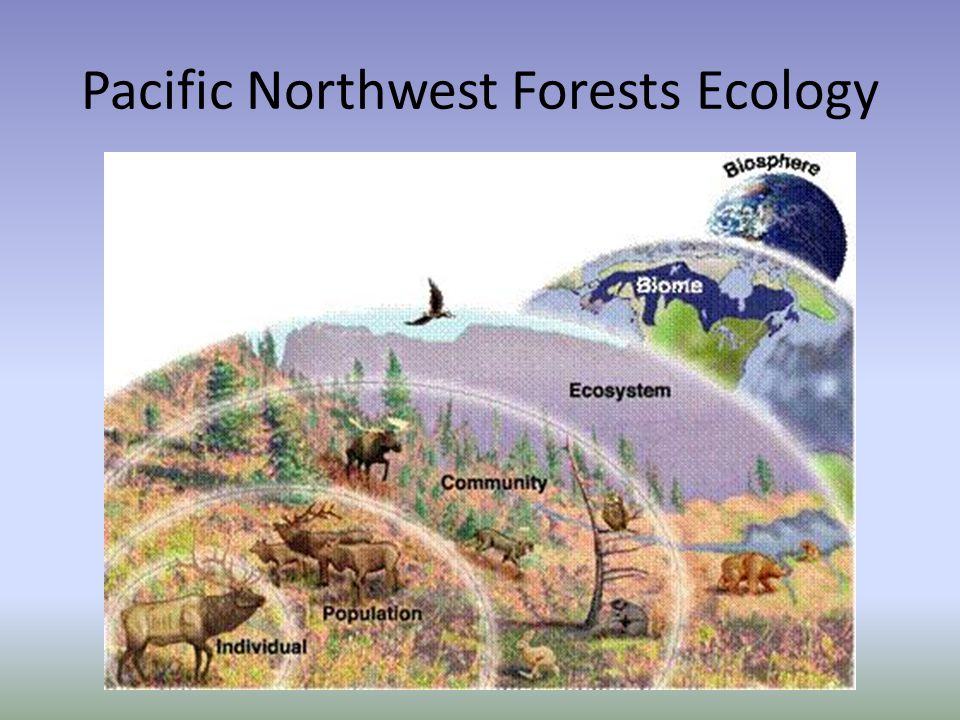 Pacific Northwest Forests Ecology