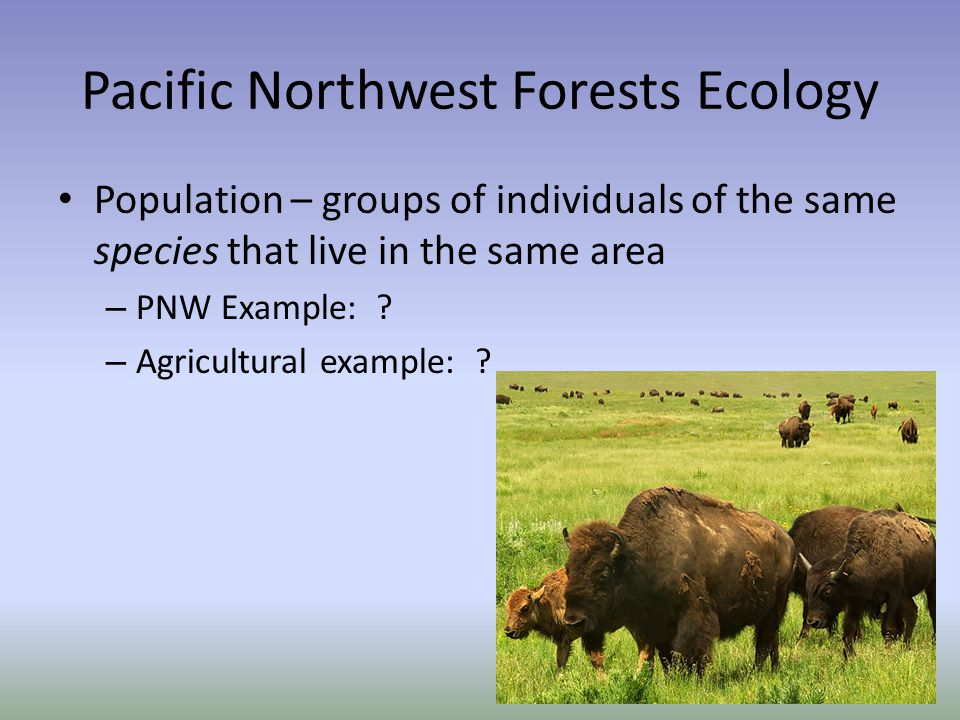 Pacific Northwest Forests Ecology Population – groups of individuals of the same species that live in the same area – PNW Example: .