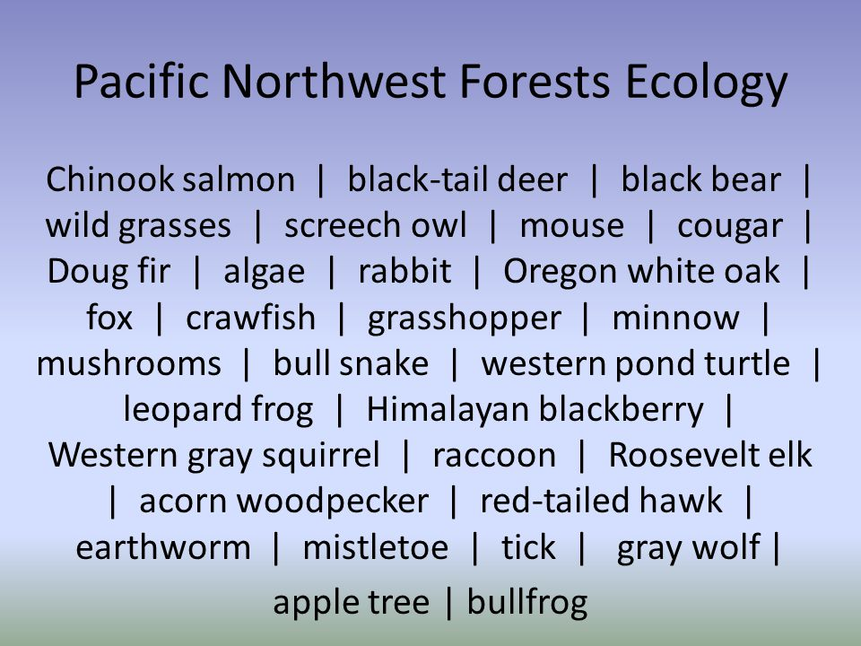 Pacific Northwest Forests Ecology Chinook salmon | black-tail deer | black bear | wild grasses | screech owl | mouse | cougar | Doug fir | algae | rabbit | Oregon white oak | fox | crawfish | grasshopper | minnow | mushrooms | bull snake | western pond turtle | leopard frog | Himalayan blackberry | Western gray squirrel | raccoon | Roosevelt elk | acorn woodpecker | red-tailed hawk | earthworm | mistletoe | tick | gray wolf | apple tree | bullfrog