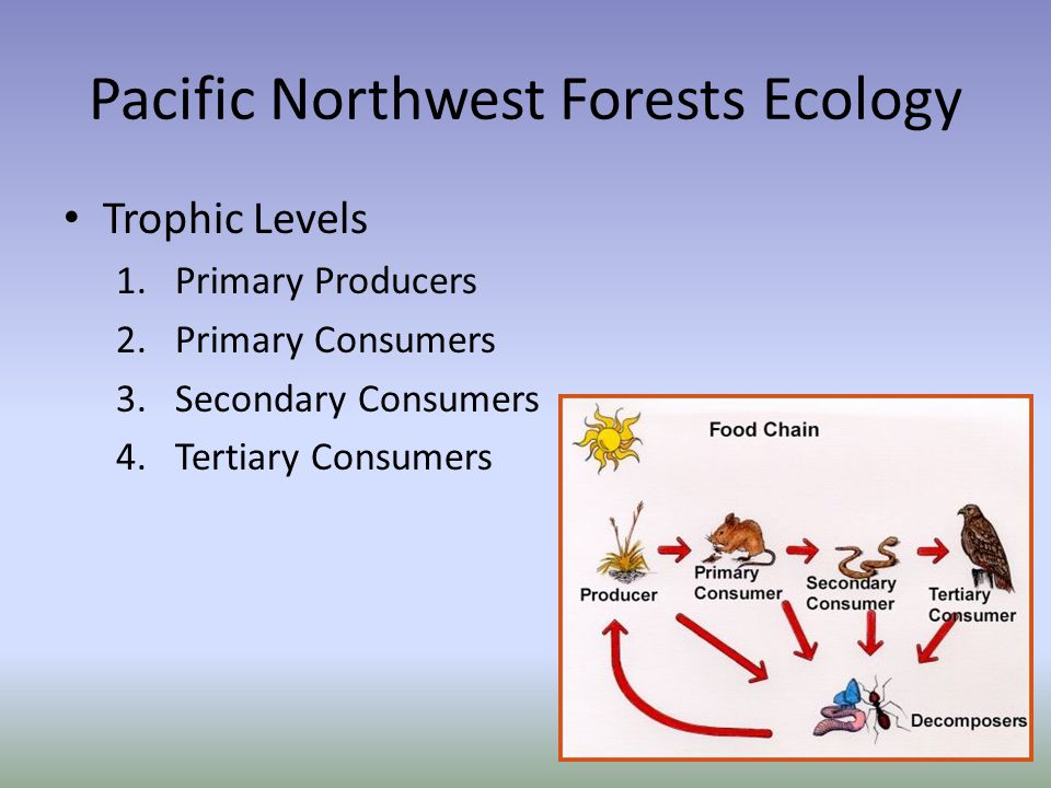 Pacific Northwest Forests Ecology Trophic Levels 1.Primary Producers 2.Primary Consumers 3.Secondary Consumers 4.Tertiary Consumers