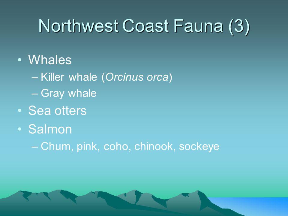 Northwest Coast Fauna (3) Whales –Killer whale (Orcinus orca) –Gray whale Sea otters Salmon –Chum, pink, coho, chinook, sockeye